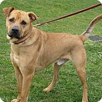 Adopt A Pet :: Tank - New Kensington, PA