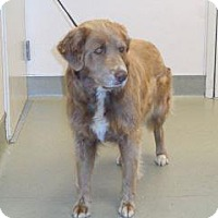 Adopt A Pet :: Natasha - Wildomar, CA