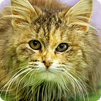 Adopt A Pet :: Willow - South Bend, IN