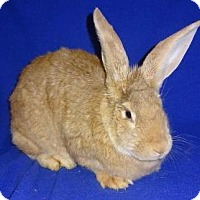Adopt A Pet :: Shelby - Woburn, MA