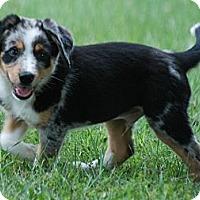 Adopt A Pet :: Clemson - Providence, RI