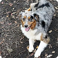 Adopt A Pet :: Madigan - PENDING - Savannah, GA