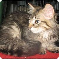 Adopt A Pet :: Karma - Acme, PA