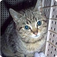 Adopt A Pet :: Violet - Nashville, TN