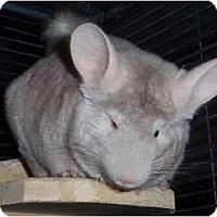Adopt A Pet :: Zorra - Virginia Beach, VA