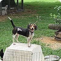 Adopt A Pet :: Sky - Salem, NH