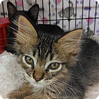 Adopt A Pet :: Wally - Morgan Hill, CA