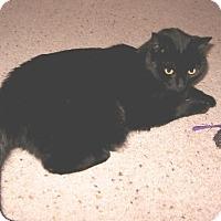 Adopt A Pet :: Minnie - Colmar, PA