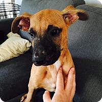 Adopt A Pet :: Sven - Nashville, TN