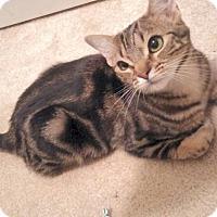 Adopt A Pet :: Mogli - The Colony, TX