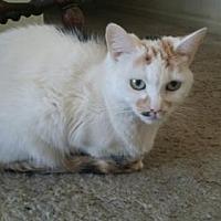 Adopt A Pet :: Tinkerbell - Fresno, CA