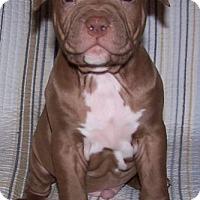 Adopt A Pet :: Cassidy - Framingham, MA