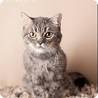 Adopt A Pet :: Aladdin - Gilbert, AZ