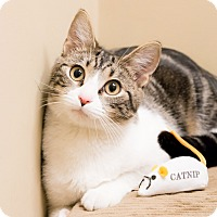 Adopt A Pet :: Isabel - Chicago, IL