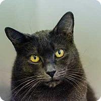 Adopt A Pet :: FOXXY - Decatur, GA