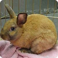 Adopt A Pet :: ANDREW - Brooklyn, NY
