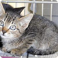 Adopt A Pet :: Karev - Lake Panasoffkee, FL
