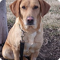Adopt A Pet :: Ginger - Lewisville, IN