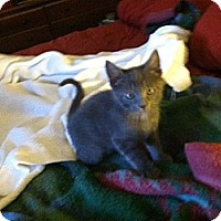 Adopt A Pet :: Lucky - Omaha, NE