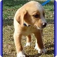 Adopt A Pet :: Sam - Staunton, VA