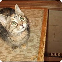 Adopt A Pet :: Janie (so sweet) - Sterling Hgts, MI
