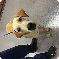 Adopt A Pet :: Casey - Cumming, GA