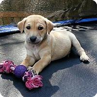 Adopt A Pet :: Twix - Brattleboro, VT