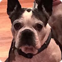 Adopt A Pet :: BELLE - North Augusta, SC