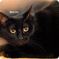 Adopt A Pet :: Midnite - McDonough, GA