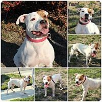 Adopt A Pet :: Emmi - Yuba City, CA