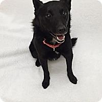 Adopt A Pet :: Porky - Mission Viejo, CA
