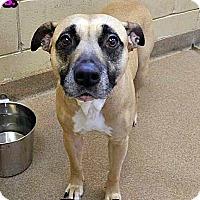Adopt A Pet :: 1-7 Bridget - Triadelphia, WV