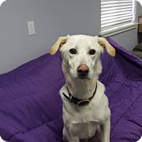 Adopt A Pet :: Windsor - Hawk Point, MO