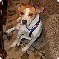 Adopt A Pet :: Emma - Pataskala, OH