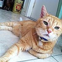 Adopt A Pet :: Romeo - Miami, FL