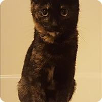 Adopt A Pet :: Iris - Sherwood, OR