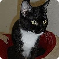 Adopt A Pet :: Jingle - Seattle, WA