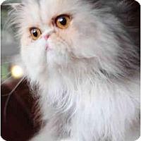 Adopt A Pet :: Jassi - Columbus, OH