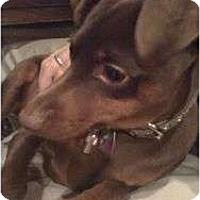 Adopt A Pet :: Ramone - Grand Rapids, MI