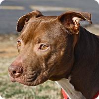 Adopt A Pet :: Alaric - Mebane, NC