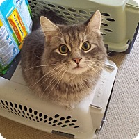 Adopt A Pet :: Finnick - Irvine, CA