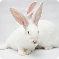 New Zealand for adoption in Los Angeles, California - Abbott & Costello