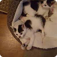 Adopt A Pet :: 1Jack Sparrow - Delmont, PA