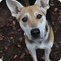 Adopt A Pet :: Ansley - Atlanta, GA