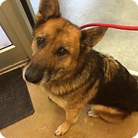 Adopt A Pet :: Beck (Cat Tolerant) - Greeneville, TN