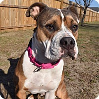 Adopt A Pet :: Duchess - Goldsboro, NC