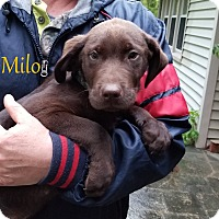 Adopt A Pet :: Milo - Milford, NJ