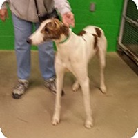 Adopt A Pet :: MV's Hermit - Knoxville, TN
