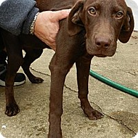 Adopt A Pet :: Molly - South Jersey, NJ