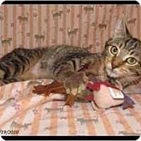 Adopt A Pet :: Teva - Orlando, FL